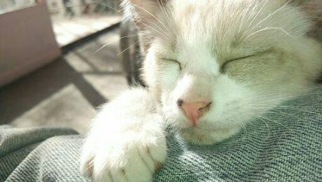 ¿es necesario vacunar a mi gato?