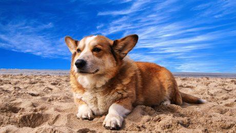 golpe de calor en el perro