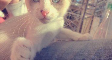 primeros dias del gatito en casa